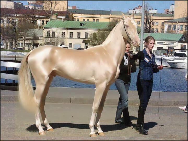 Most beautiful horse in the world in Turkey
