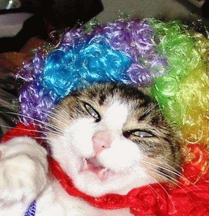 Name:  2291_Clown%20Cat.jpg