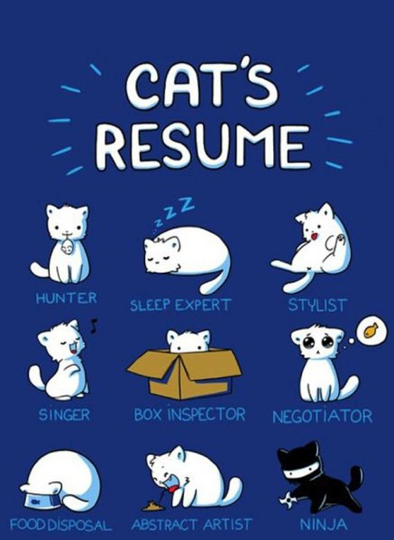 Name:  Cats Resume.jpg