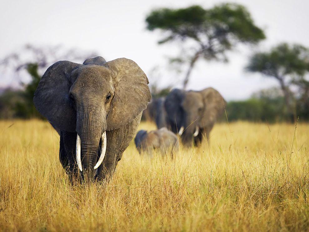 Name:  elephant-herd-grass-tanzania_22652_990x742.jpg Views: 75 Size:  120.0 KB