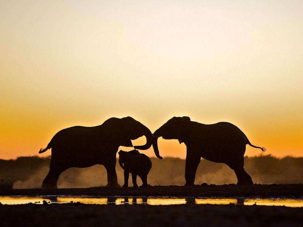 Name:  elephant-trio-etosha-national-park_48281_990x742.jpg Views: 57 Size:  53.5 KB
