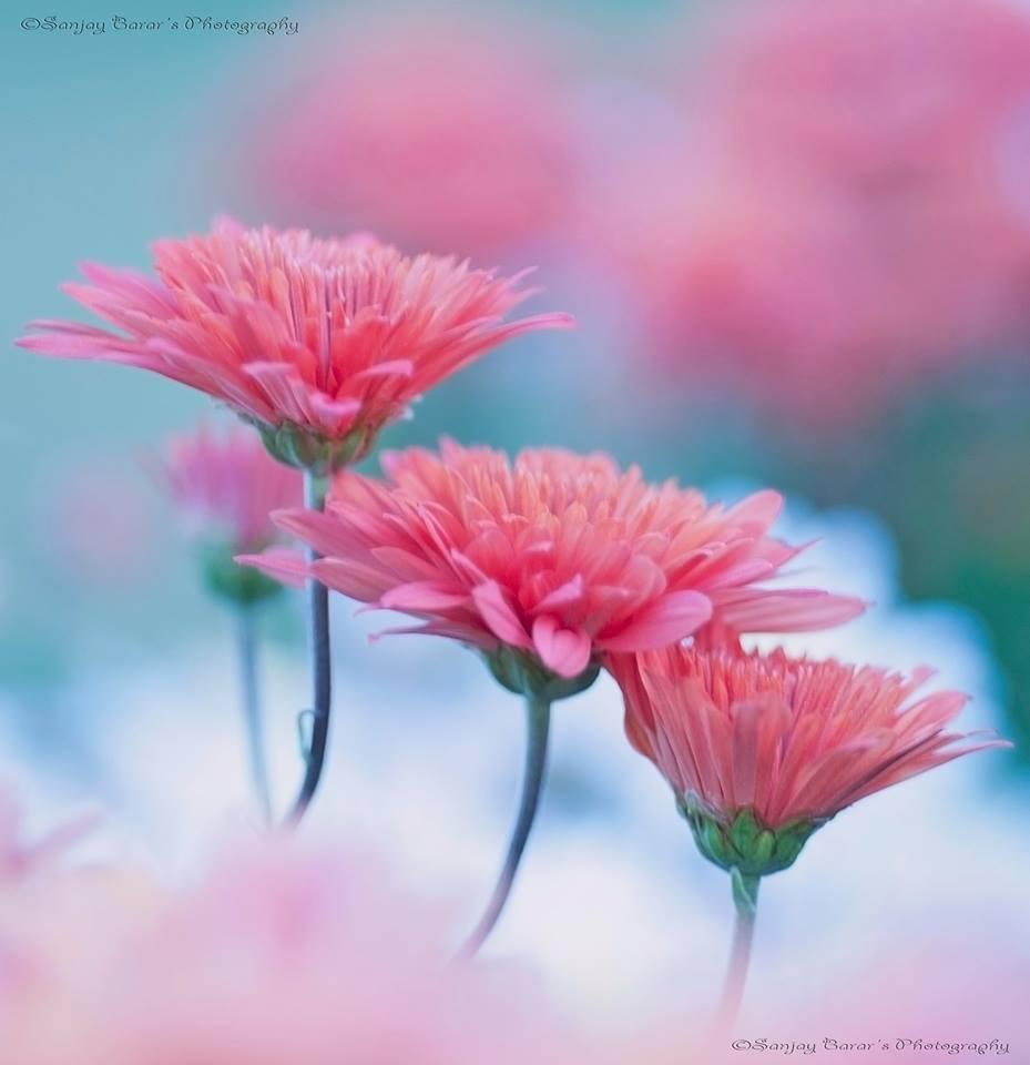 Name:  Flowers,.jpg Views: 114 Size:  48.6 KB