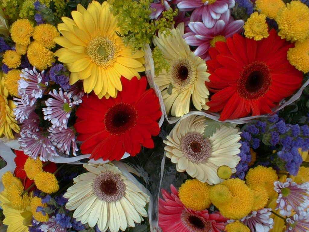 Name:  flowersb.jpg Views: 6802 Size:  108.2 KB
