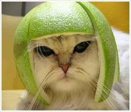 7730d1263789740 go green with eco friendly hairstyle funny cat with orange