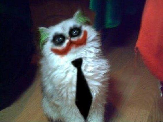 Name:  joker cat.jpg Views: 216 Size:  27.5 KB