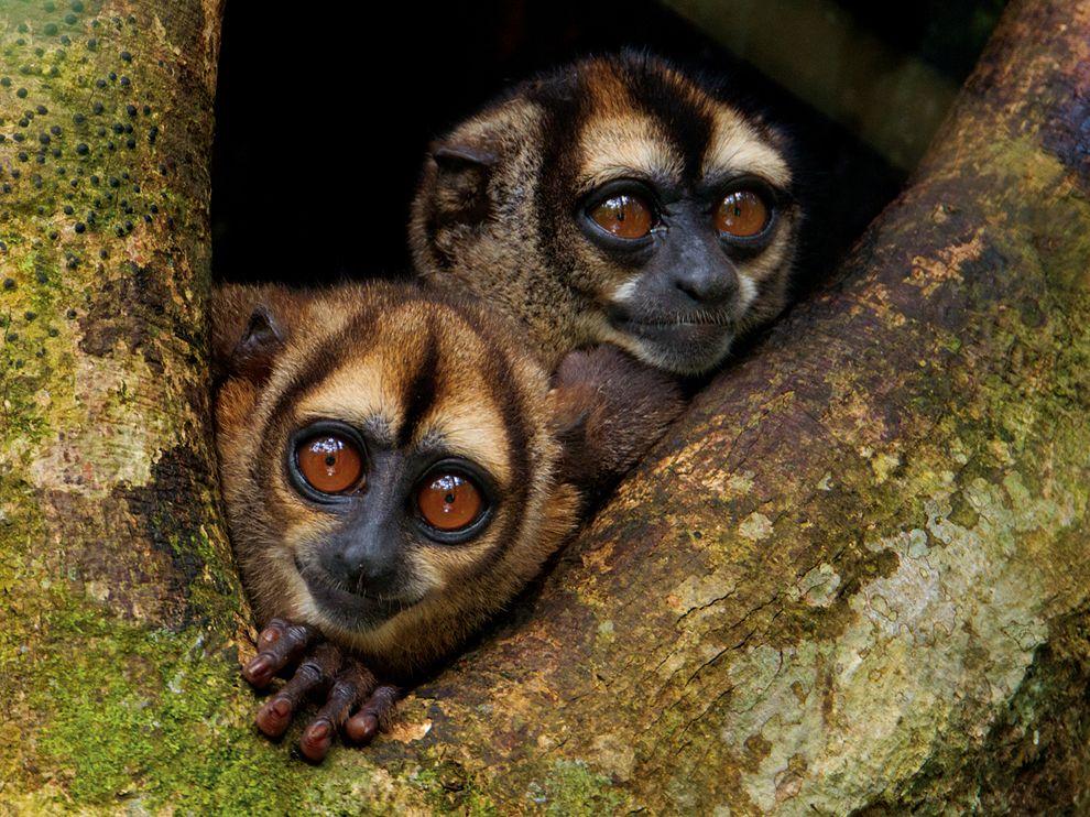Name:  noisy-night-monkeys-laman_64695_990x742.jpg Views: 62 Size:  184.5 KB
