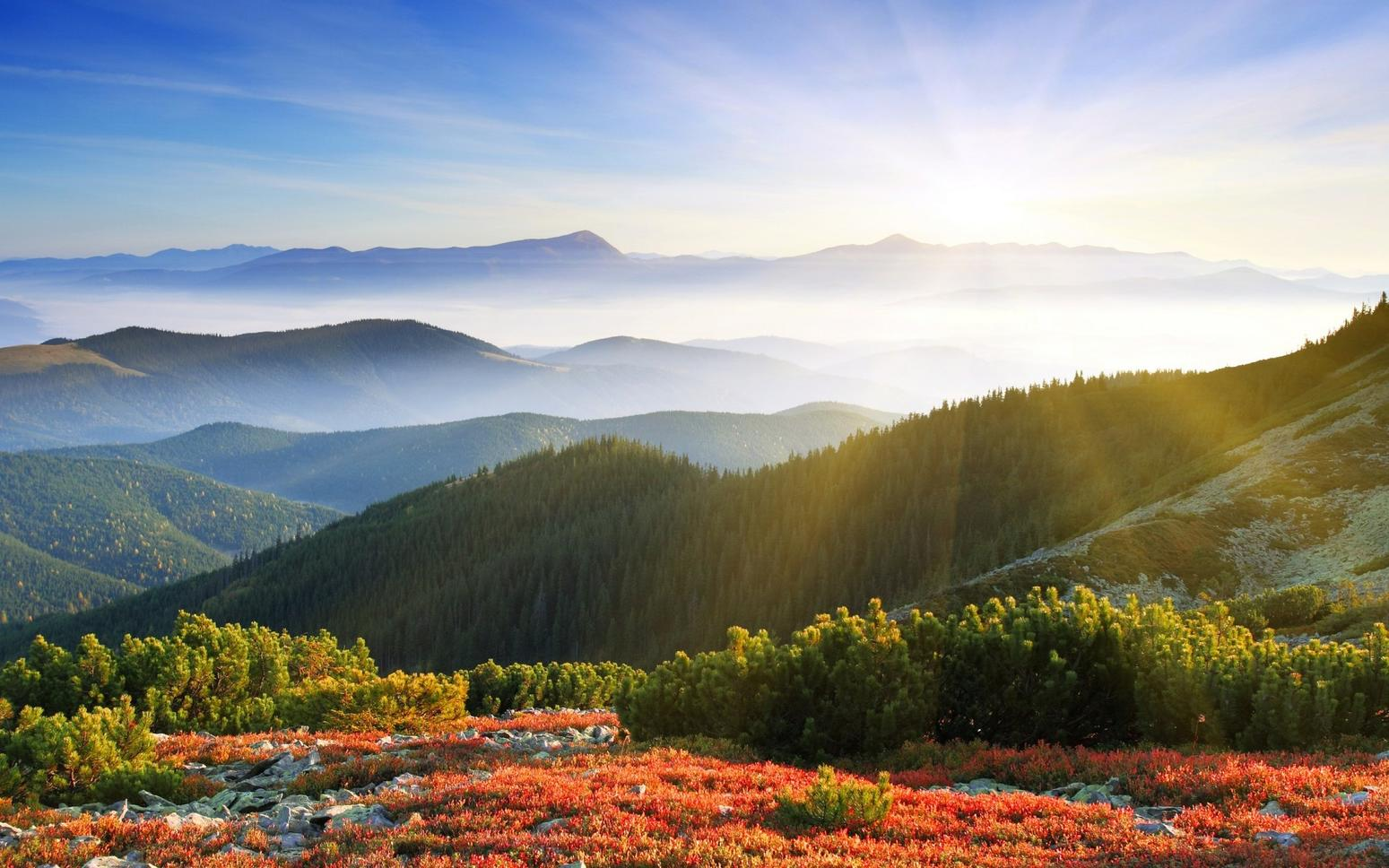 Name:  sunrise_forest_mountains-1920x1200.jpg
