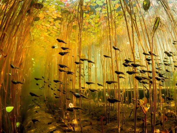 Name:  tadpoles-swamp-canada_62585_600x450.jpg