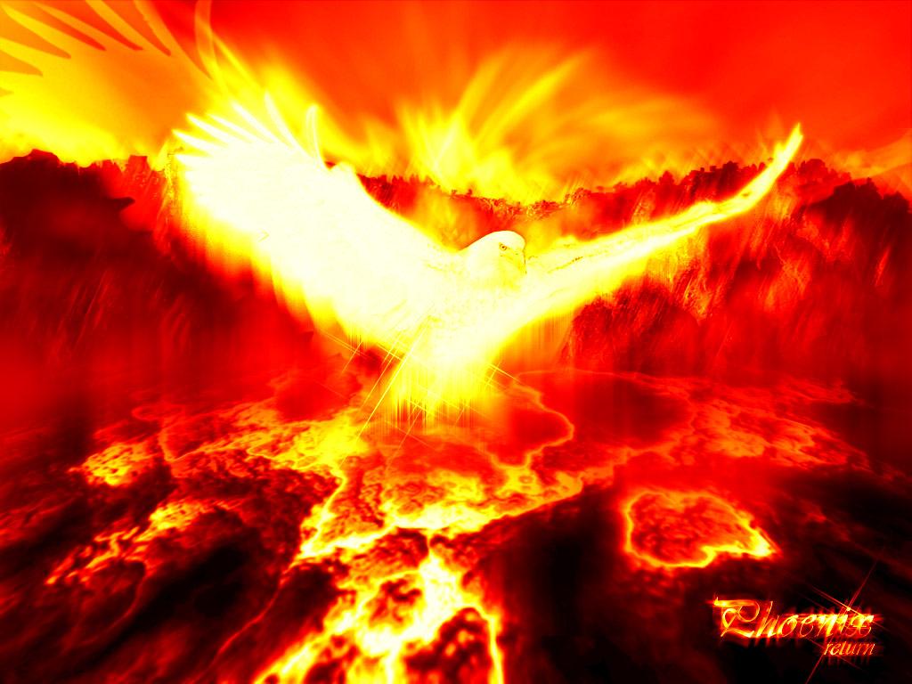 http://www.unp.co.in/attachments/f96/2311d1184179956-fire-bird-wallpaper_8265.jpg