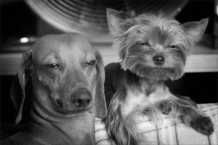Dogs Who Look High | Unp.me